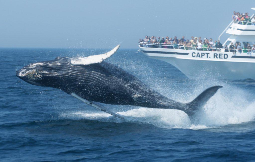 CCO_whalewatching